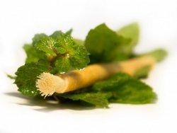 Siwak - přírodní zubní kartáček s příchutí máty - pro svěží chuť ve vašich ústech